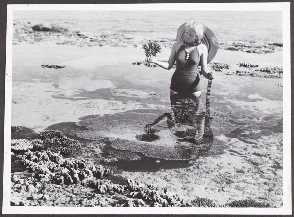 """Coral Pool, Heron Island, Great Barrier Reef, QLD"", 1947, Commercial Travellers' Association Administrative Records and Publications, 1979.0162.02560."